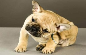 Effective Homemade Flea Treatment for Puppies that Works Every Time