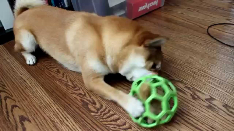 Find Appropriate Indestructible Dog Chew Toys with No Trouble