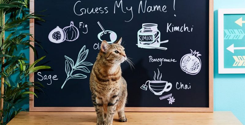 Food Names For Cats and Why Do You Pick Them