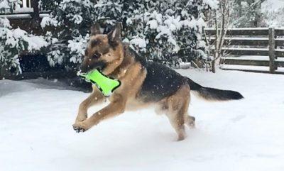 Kevlar Dog Toys for Destructive Chewers