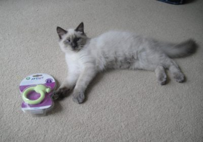 The Great Products of Awesome Kitten Teething Toys