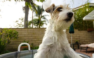 The Most Popular Benefits of Using Waterless Dog Shampoo
