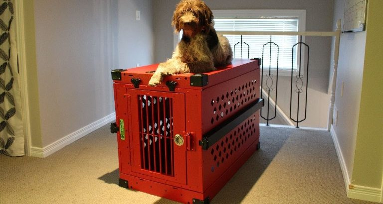 What to Know about Anxiety Dog Crate Before Making a Purchase