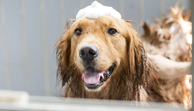 Which Antifungal Dog Shampoo to Pick for Your Dog