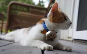 GPS microchip for cats