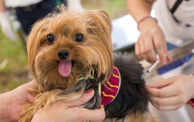 DA2PP Vaccine for Dogs