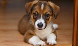 deworming side effects in puppies