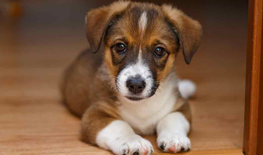 Deworming Side Effects in Puppies, Explanation and How to React