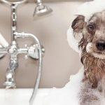 doghaus pet shampoo