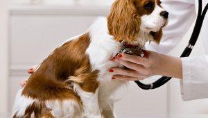 DA2PPV Vaccine for Dogs