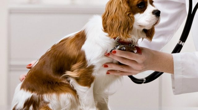 DA2PPV Vaccine for Dogs