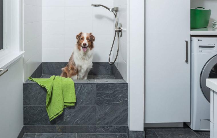 Phytovet ck antiseptic dog shampoo
