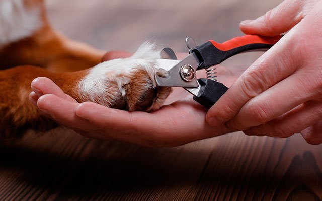 Quickfinder Dog Nail Clippers to Easily and Safely Cut Your Dogs' Nails