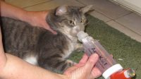 Cat Asthma Inhaler, a Must-have Device for Cat Asthma Patients