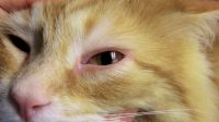 Cat Sneezing and Watery Eyes Cause, Remedy and Preventions