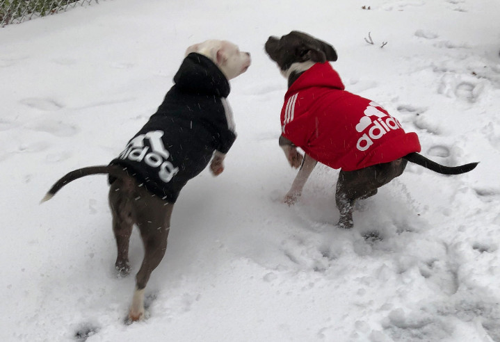 Dog Hoodies for Pitbulls 5 Amazon Recommendations of Dog's Apparel