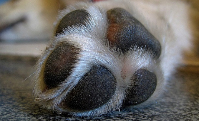 Dog Itchy Paws Home Remedy Using Safe and Natural Ingredients