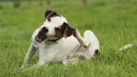 Dog Scratching Home Remedies