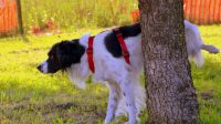 Enzyme Cleaners for Dog Urine, the Must-Try Products to Stop the Stink