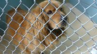 Falkenburg Animal Shelter Options Every Pet Lover Needs to Know