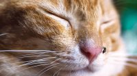Heartworm Medicine for Cats and Why it Must be Given for Cats