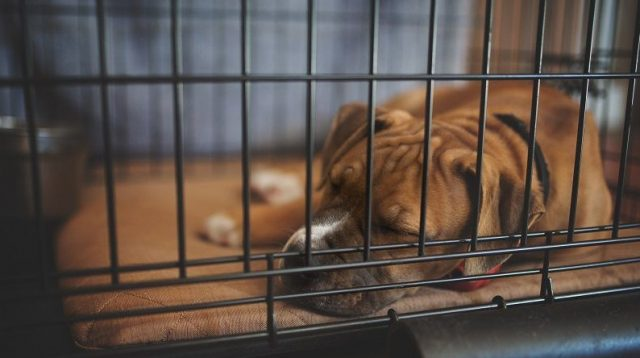 Indestructible Dog Crate Pads Usage and Benefits for Dog Owners