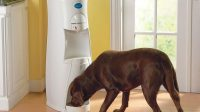 Large Dog Water Dispenser to Provide Better Hydration for Your Pet