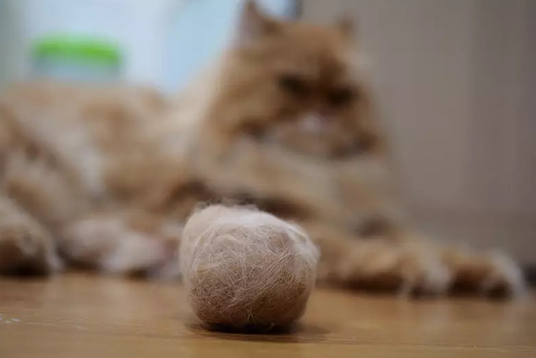 Notice Cat Hairball Stuck Symptoms and How to Prevent It