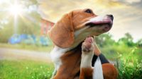 Safest Oral Flea Treatment for Dogs