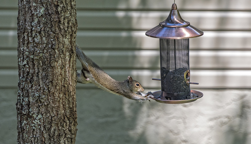 Squirrel Deterrent Bird Feeder Options to Prevent Them from Eating the Bird Food