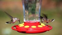 Sugar to Water Ratio for Hummingbird Food When You Make Your Own