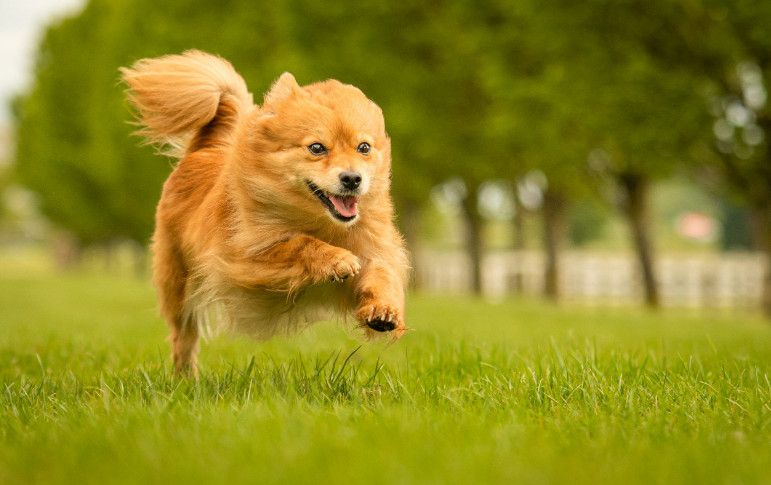 Taurine Supplement for Dogs with High Nutrient for Health Improvement
