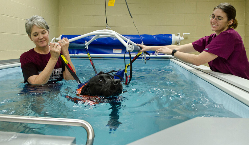 Water Therapy for Dogs near Me that You Must Consider