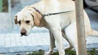 What to Feed a Constipated Dog and Get Them Out of the Pain