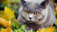 dewormer for cats home remedy