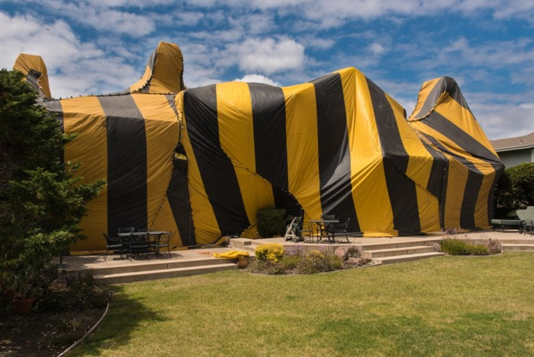 Cost of Tenting a House for Termites Using the Fumigant Method