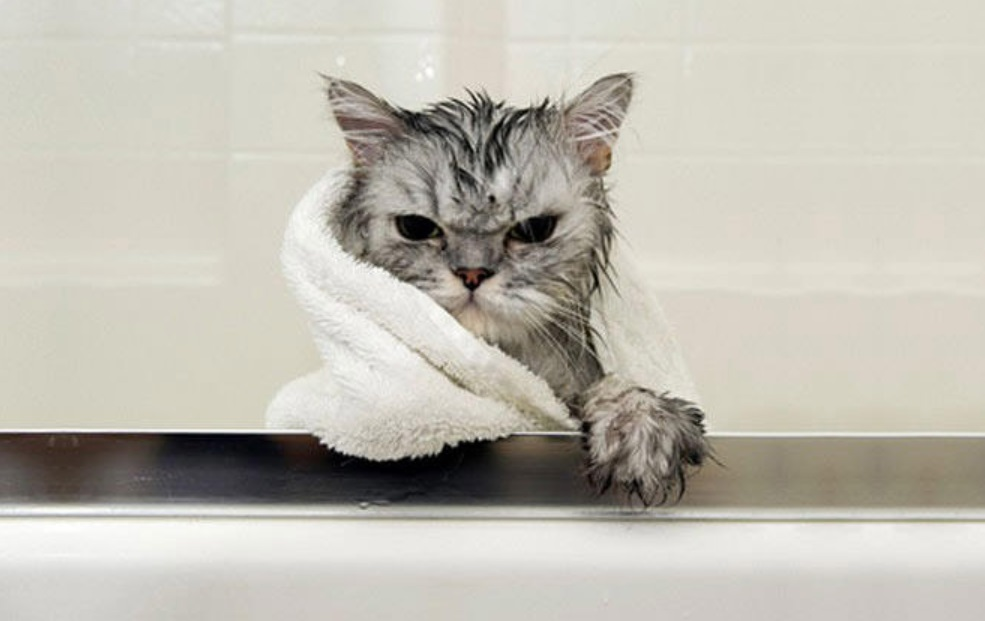 How to Bathe a Cat that Hates Water and Always Angry