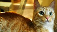 Methimazole Side Effects for Cats
