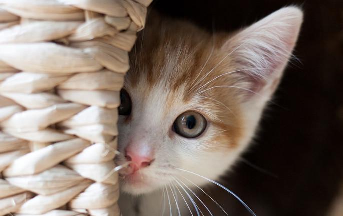 Praziquantel for Cats
