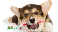 Can You Brush a Dog's Teeth with Human Toothpaste