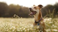 How Does Flea and Heartworm Pill Work for Animals' Disease