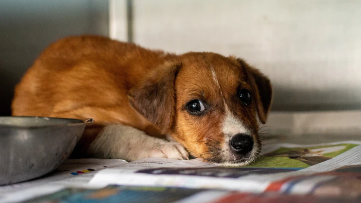 How Much Does It Cost to Treat a Dog with Parvo