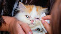 Kitten Crusty Eyes