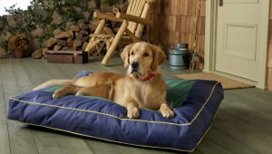 Recommendation of Beds for Arthritic Dogs