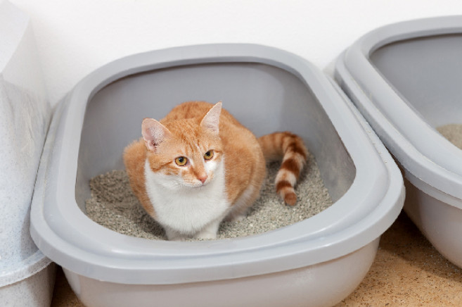 The Cat Urinating Blood Home Remedy to Try