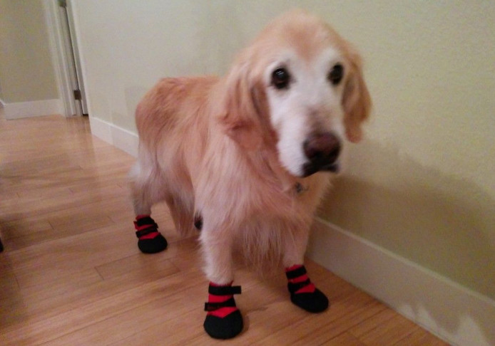 Traction booties for dogs