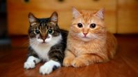 Treat Symptoms of FIV in Cats