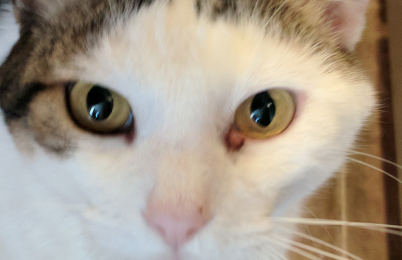 Understanding Cat Gooey Eye – Causes and Treatments