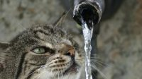 Bubbler Water Fountain and How to Choose the Right One for Cats
