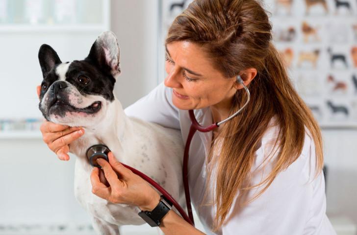 Clavamox without vet prescription